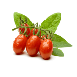Pomodori perini